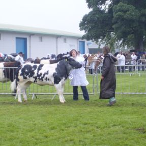 Royal Highland Show Breed 20